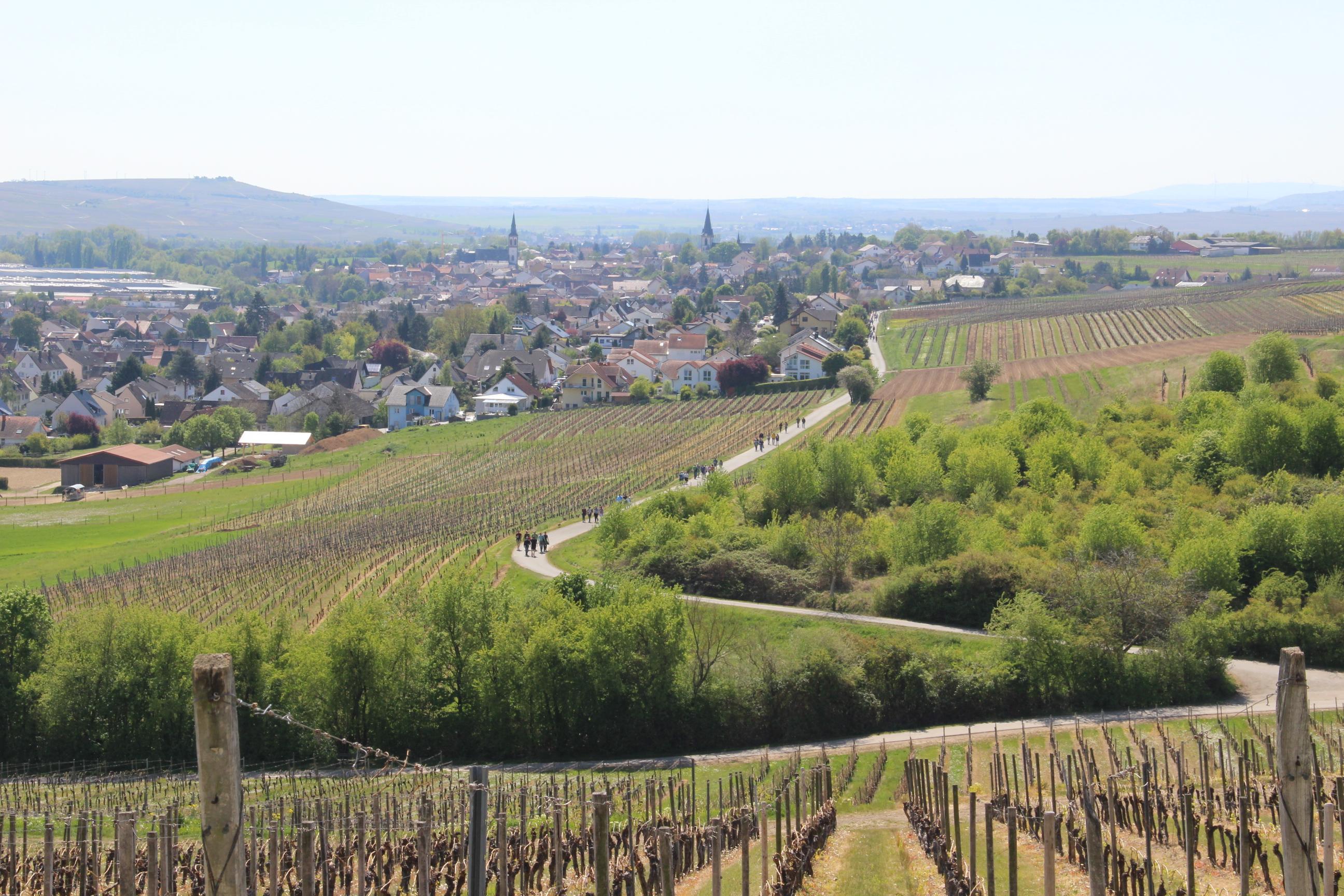 Blick auf Langenlonsheim, Illustration zum Weinwanderwochenende